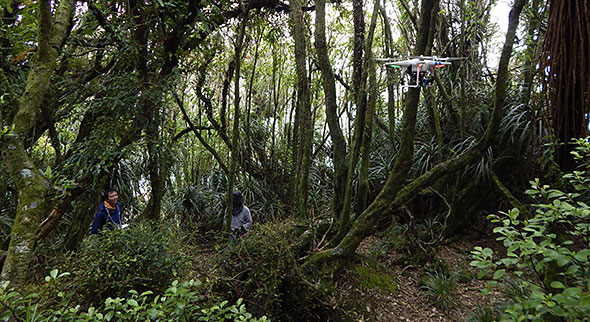 Multicopter-forest-flight-stunt pulled off like a boss