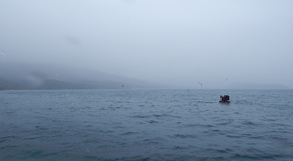 And so it begins - a rubber dinghy in pursuit of ever elusive tawaki