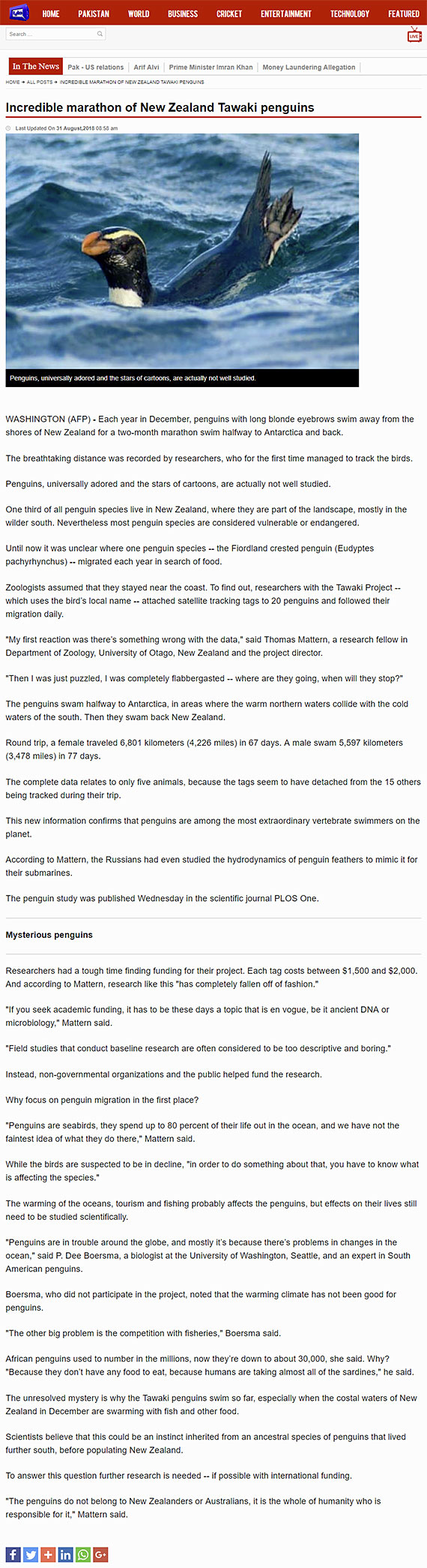 Research Diary ‹ The Tawaki Project