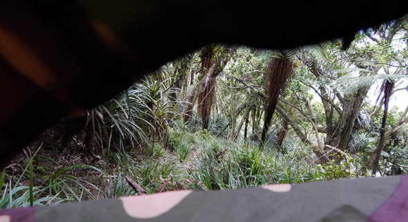The view from the tent hide of for about 9.5 of 10 hours of waiting for tawaki