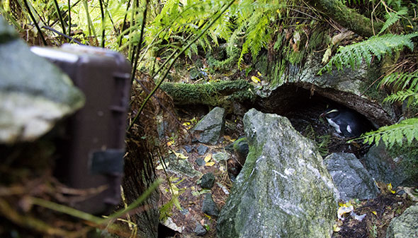 One of four time lapse cameras currently operating in Harrison Cove